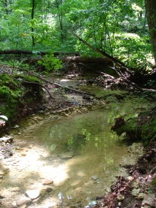 Creek at Devil's Backbone