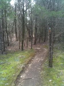 Jones Mill Trail at Long Hunter State Park